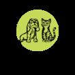 Délpesti Állatgyógyászati Központ és Sebészeti Centrum