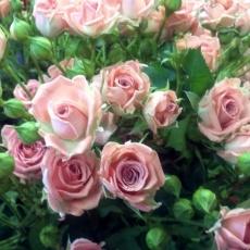 Zumor Virág