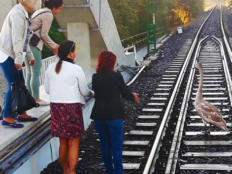 Az utasok hessegették el a sínekről a madarat (forrás: MÁV-HÉV Zrt.)