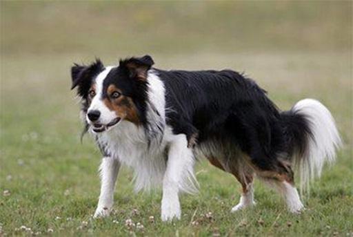 Hasonló kutyust keresnek