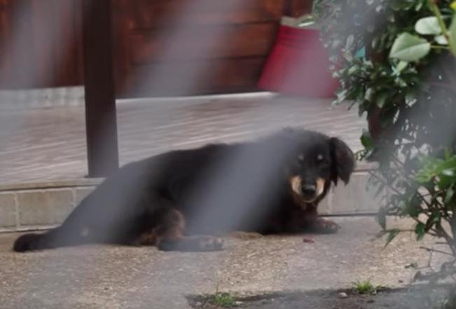 A család másik kutyája