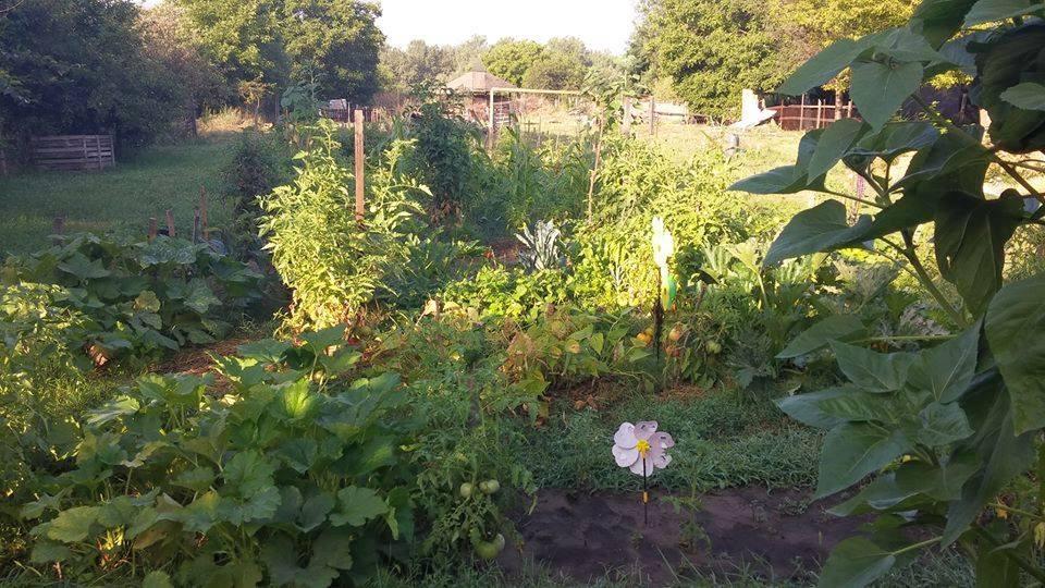Dorottya kert